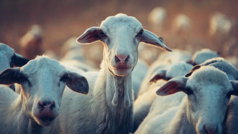 Herd thinking